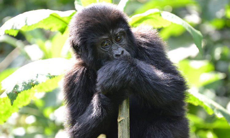 14 Days Uganda Adventure Safari