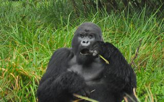 3 Days Affordable Rwanda Gorilla Tour