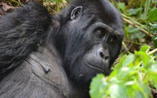 11 Days Best of Uganda and Rwanda