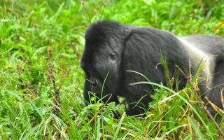 4 Days Kigoma Chimpanzee Tracking