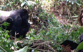 6 Days Queen Elizabeth & Bwindi Safari